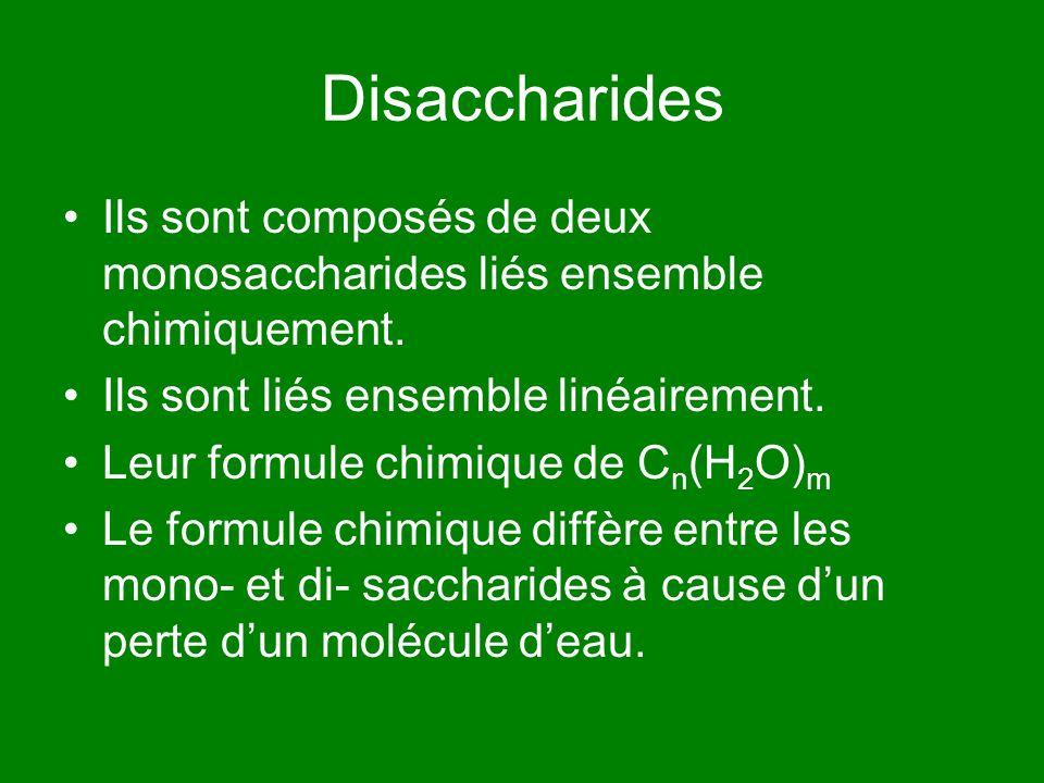 Disaccharides Ils sont composés de deux monosaccharides liés ensemble chimiquement. Ils sont liés ensemble linéairement.