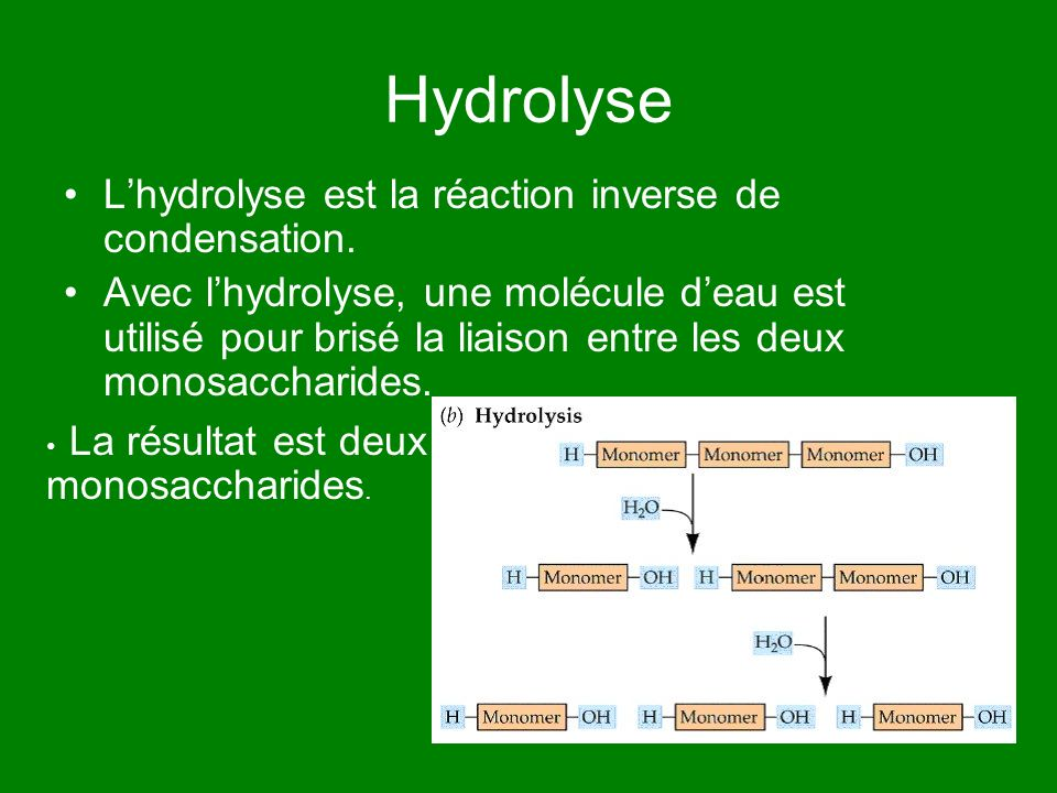 Hydrolyse L'hydrolyse est la réaction inverse de condensation.