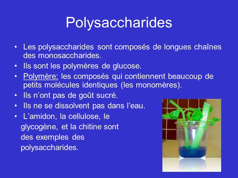 Polysaccharides Les polysaccharides sont composés de longues chaînes des monosaccharides. Ils sont les polymères de glucose.