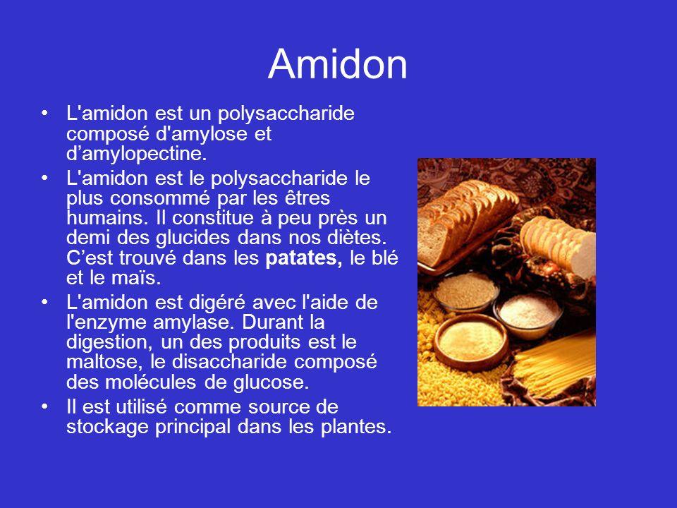 Amidon L amidon est un polysaccharide composé d amylose et d'amylopectine.
