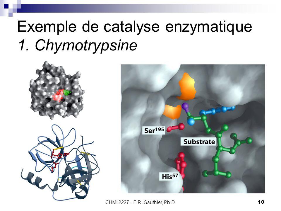 Exemple de catalyse enzymatique 1. Chymotrypsine