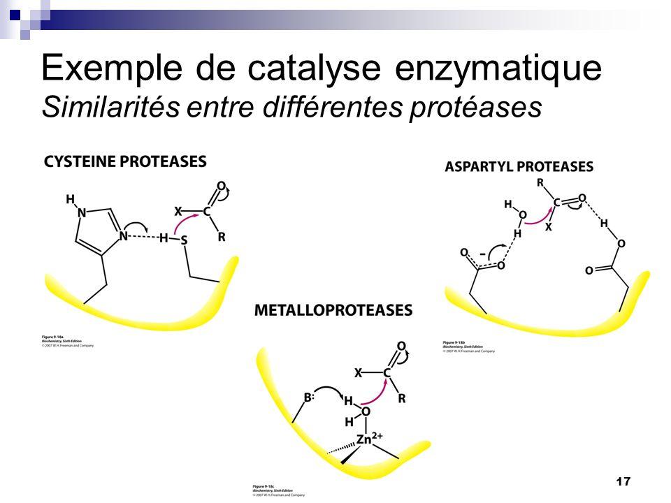 Exemple de catalyse enzymatique Similarités entre différentes protéases