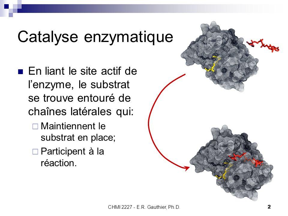 Catalyse enzymatique En liant le site actif de l'enzyme, le substrat se trouve entouré de chaînes latérales qui: