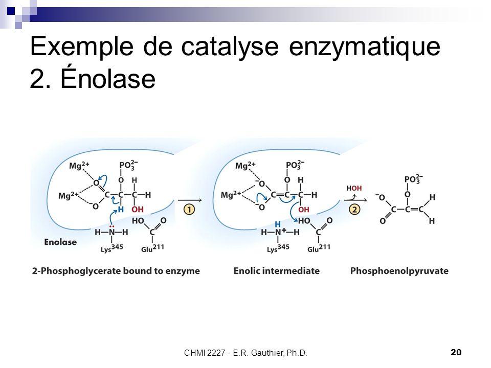 Exemple de catalyse enzymatique 2. Énolase