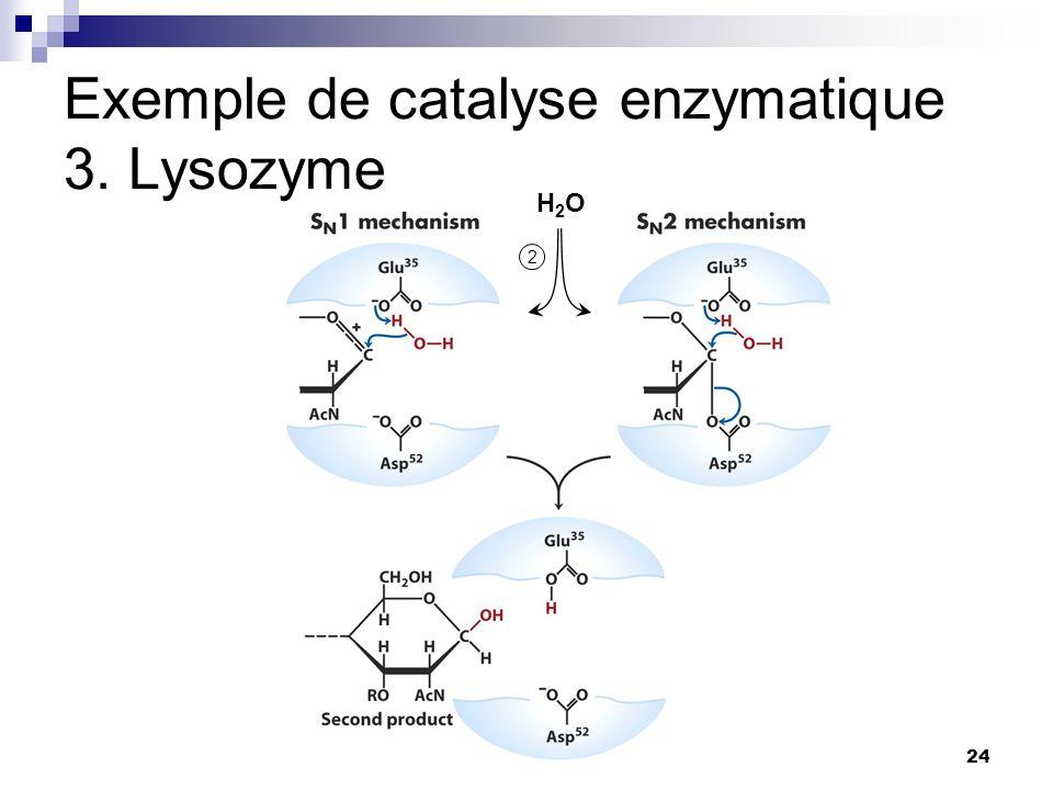 Exemple de catalyse enzymatique 3. Lysozyme