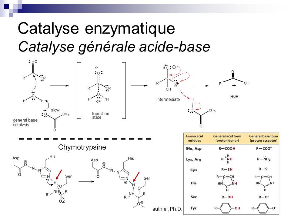 Catalyse enzymatique Catalyse générale acide-base