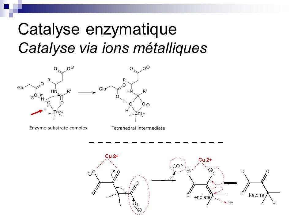 Catalyse enzymatique Catalyse via ions métalliques