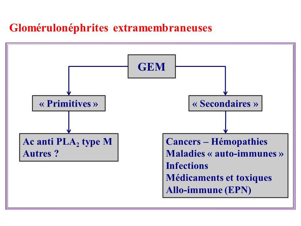 Glomérulonéphrites extramembraneuses