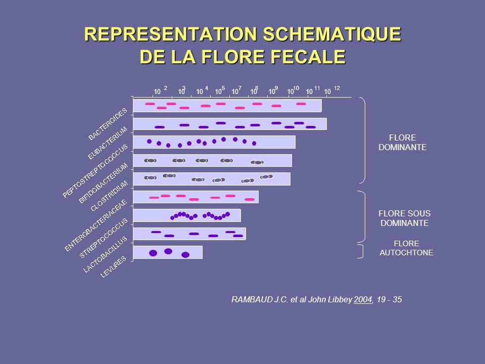REPRESENTATION SCHEMATIQUE DE LA FLORE FECALE