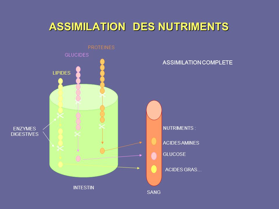 ASSIMILATION DES NUTRIMENTS
