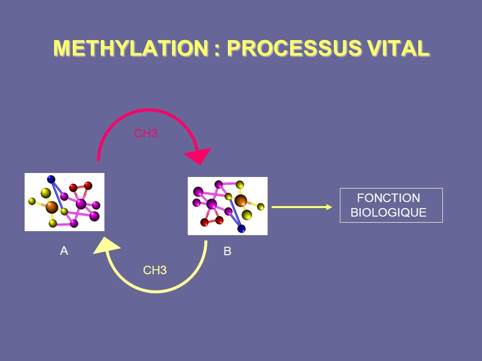 METHYLATION : PROCESSUS VITAL