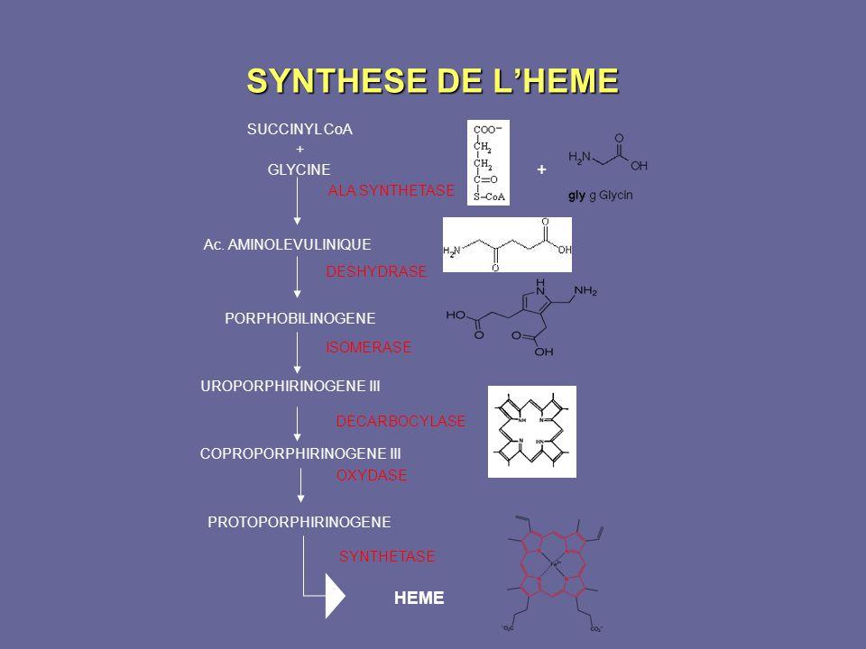 SYNTHESE DE L'HEME + HEME SUCCINYL CoA GLYCINE ALA SYNTHETASE