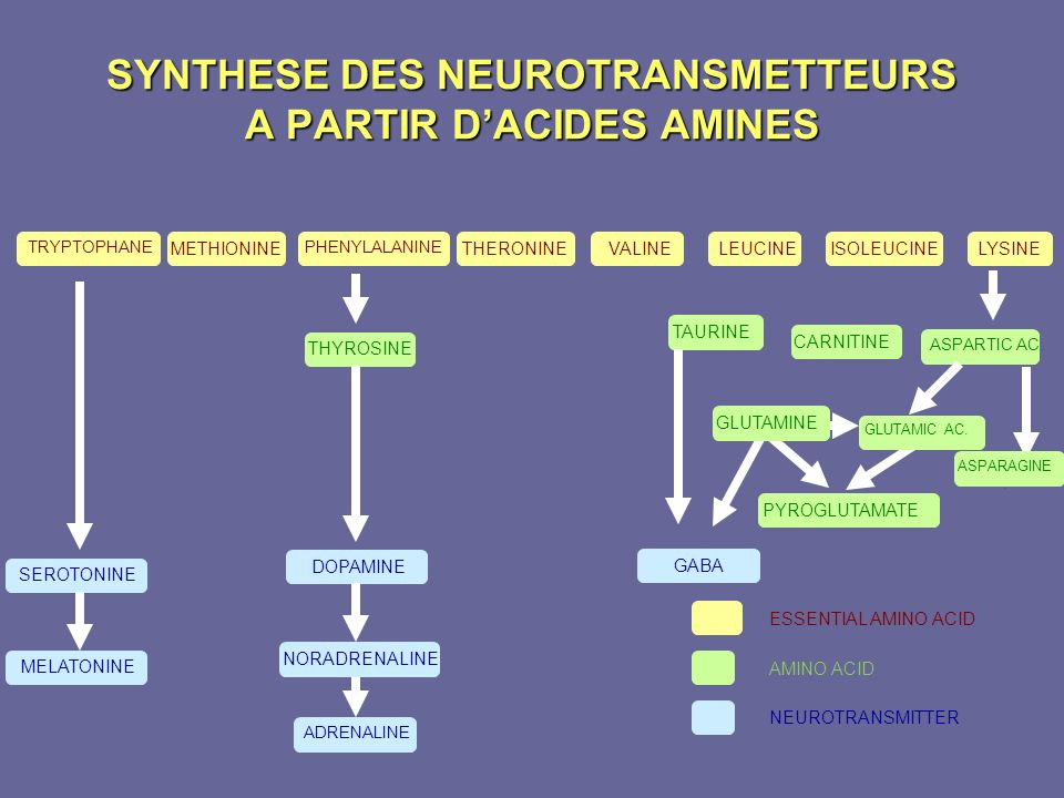 SYNTHESE DES NEUROTRANSMETTEURS A PARTIR D'ACIDES AMINES