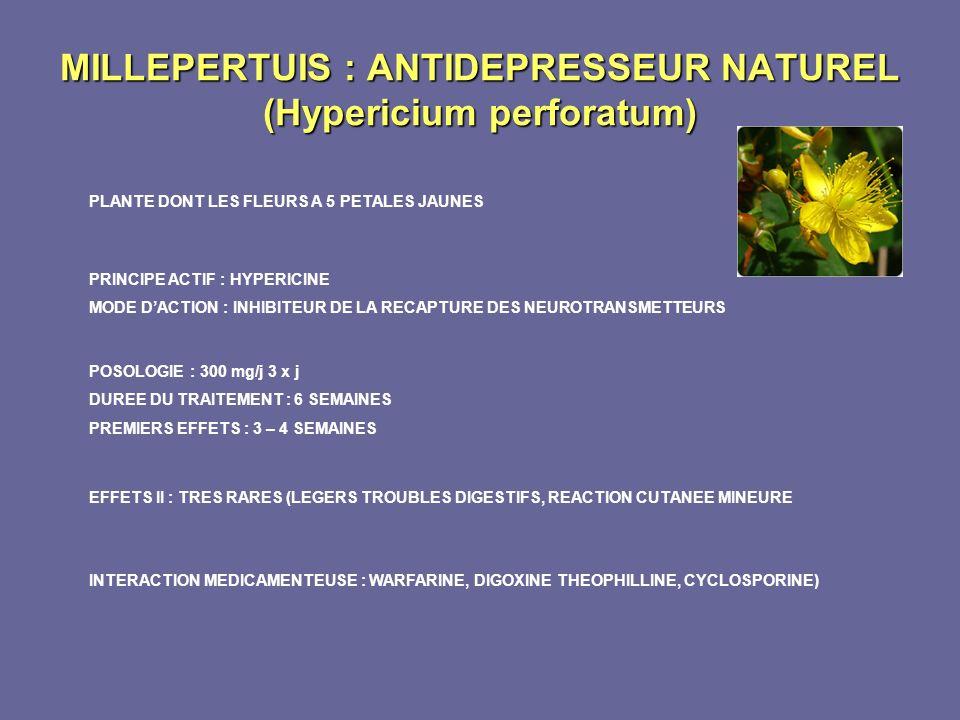 MILLEPERTUIS : ANTIDEPRESSEUR NATUREL (Hypericium perforatum)