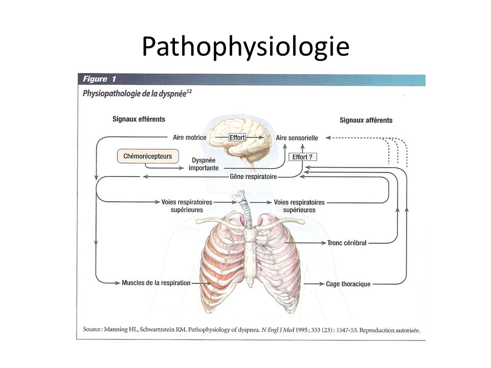Pathophysiologie