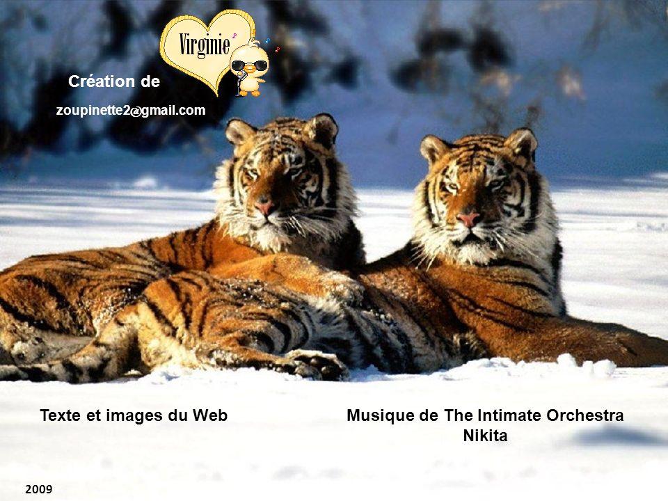 Musique de The Intimate Orchestra Nikita