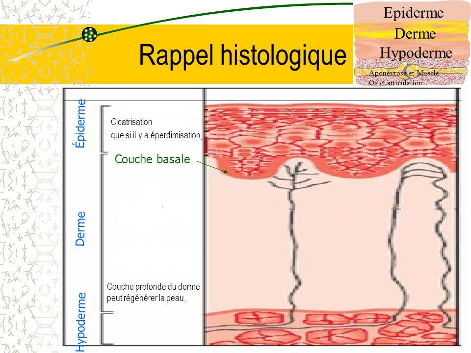 Rappel histologique Epiderme Derme Hypoderme Épiderme Couche basale