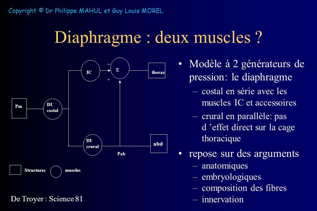 Diaphragme : deux muscles