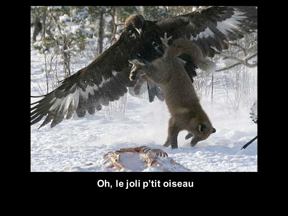 Oh, le joli p'tit oiseau