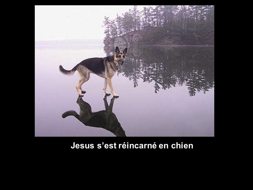 Jesus s'est réincarné en chien