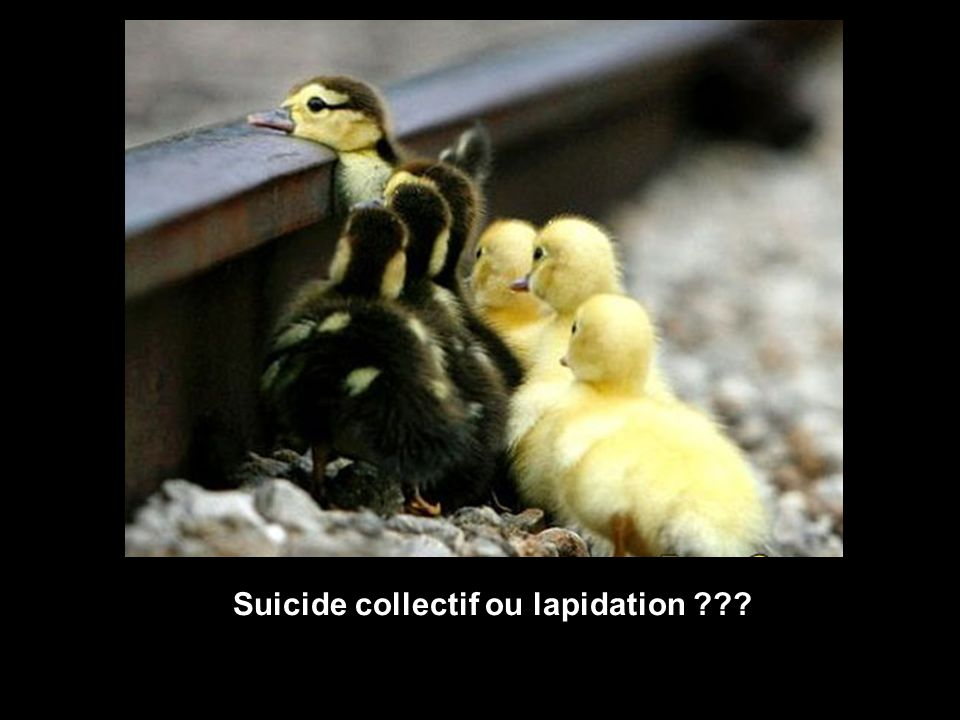 Suicide collectif ou lapidation
