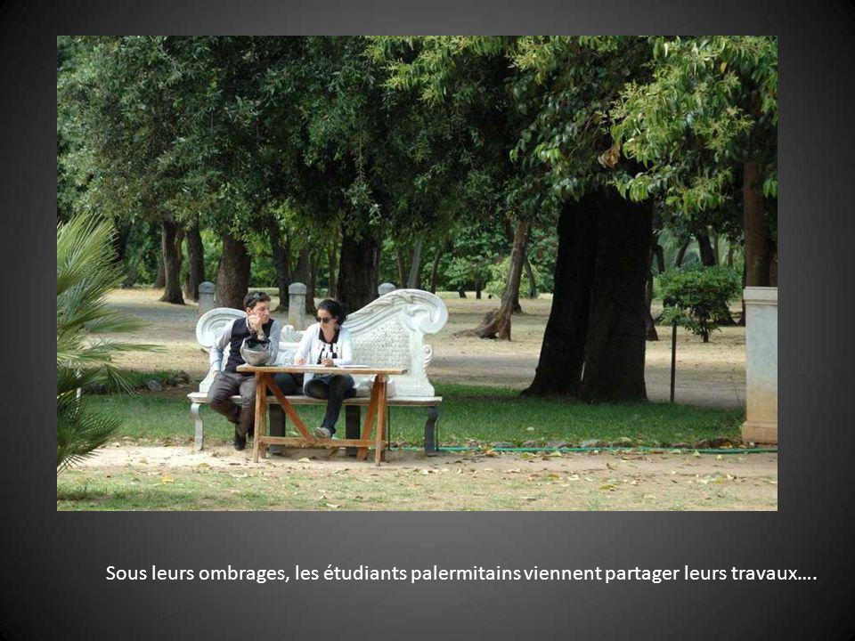 Sous leurs ombrages, les étudiants palermitains viennent partager leurs travaux….