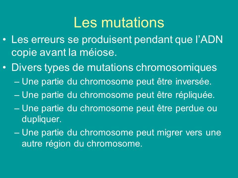 Les mutations Les erreurs se produisent pendant que l'ADN copie avant la méiose. Divers types de mutations chromosomiques.