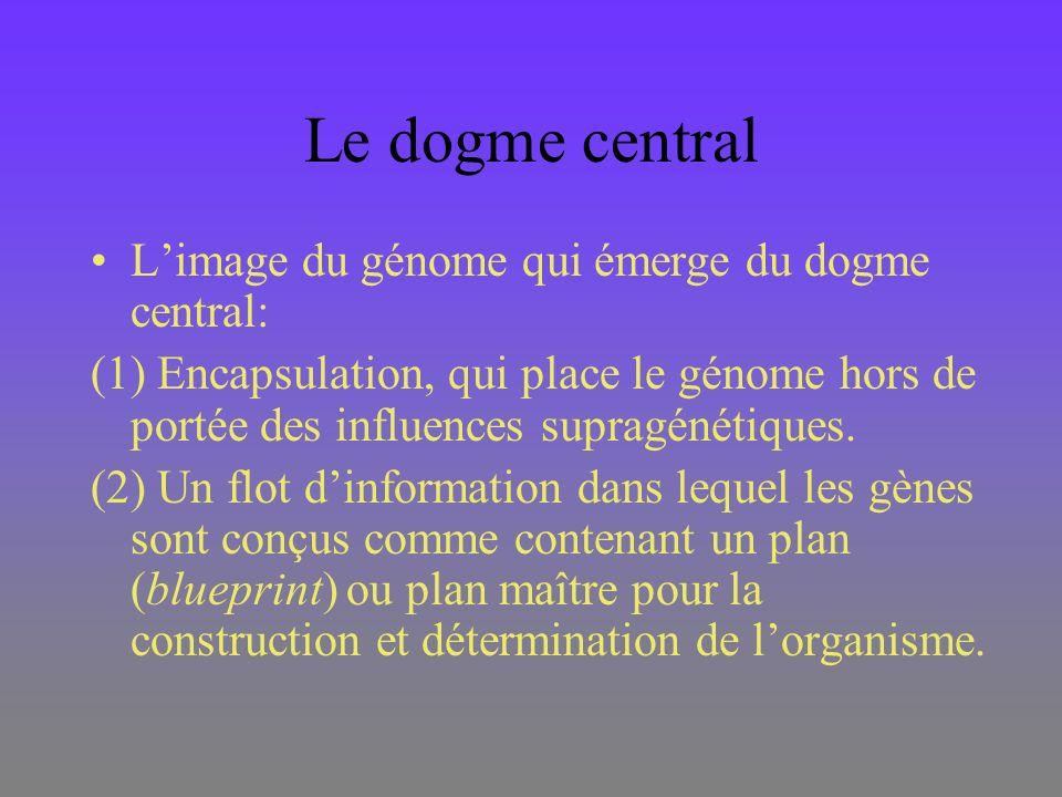 Le dogme central L'image du génome qui émerge du dogme central: