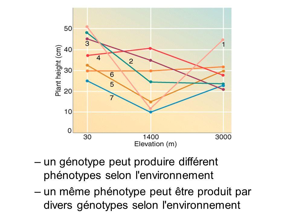 un génotype peut produire différent phénotypes selon l environnement