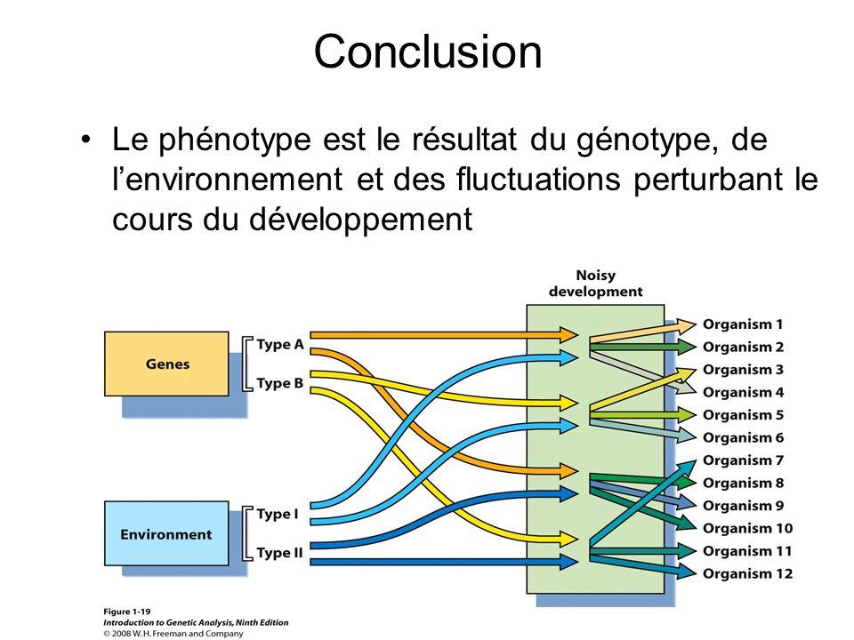 Conclusion Le phénotype est le résultat du génotype, de l'environnement et des fluctuations perturbant le cours du développement.
