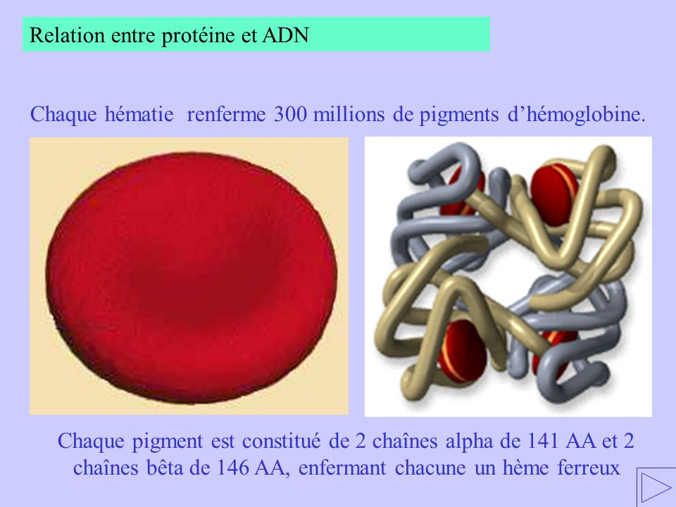 Chaque hématie renferme 300 millions de pigments d'hémoglobine.