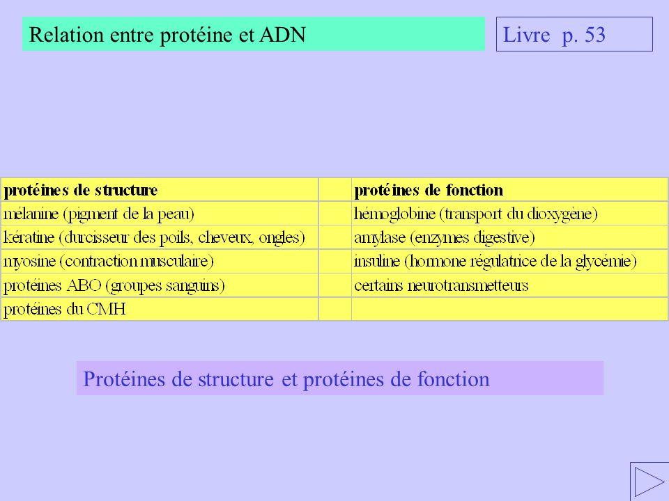 Relation entre protéine et ADN