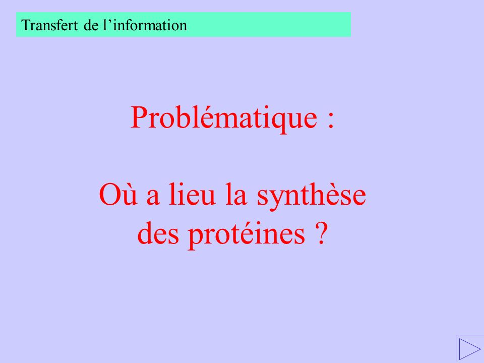 Où a lieu la synthèse des protéines