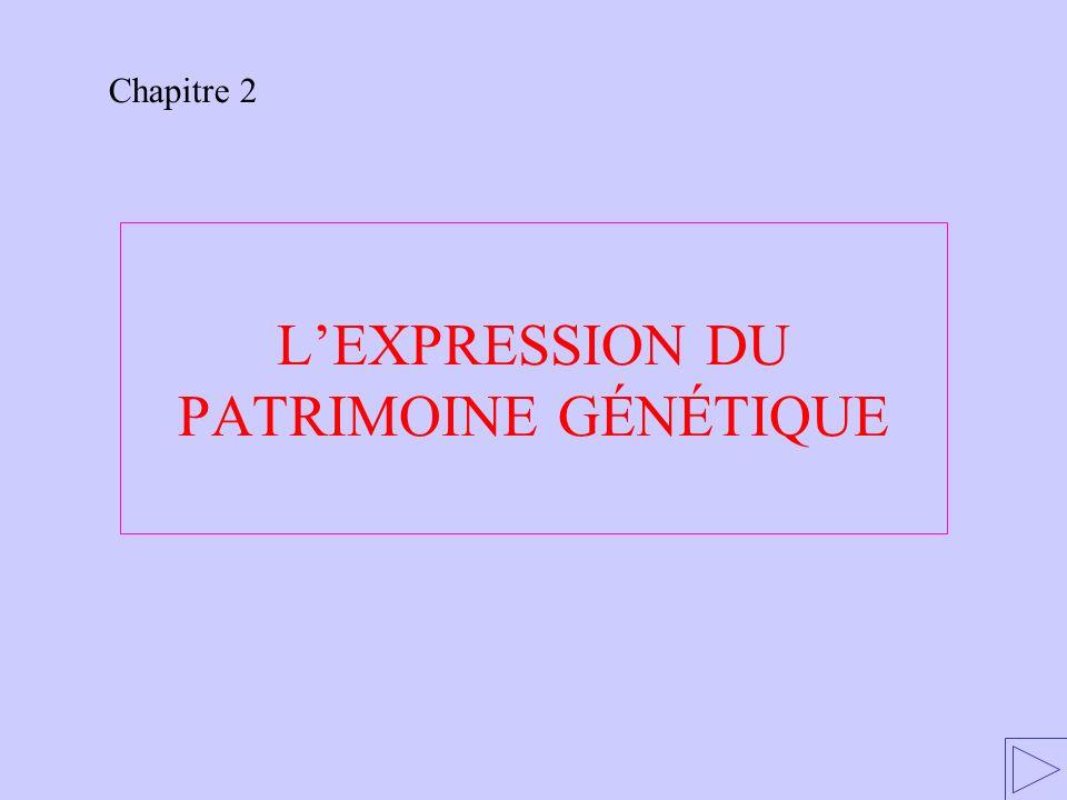 L'EXPRESSION DU PATRIMOINE GÉNÉTIQUE