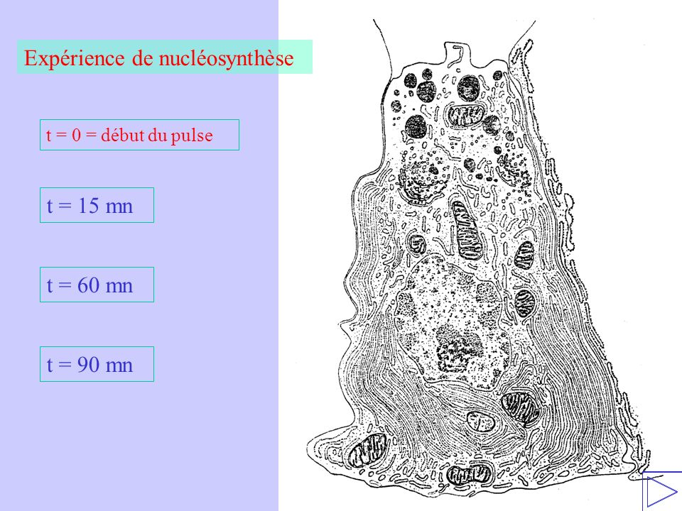 Expérience de nucléosynthèse