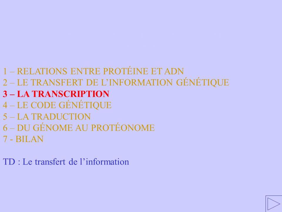 3 – LE MÉCANISME DE RÉPLICATION DE L'ADN