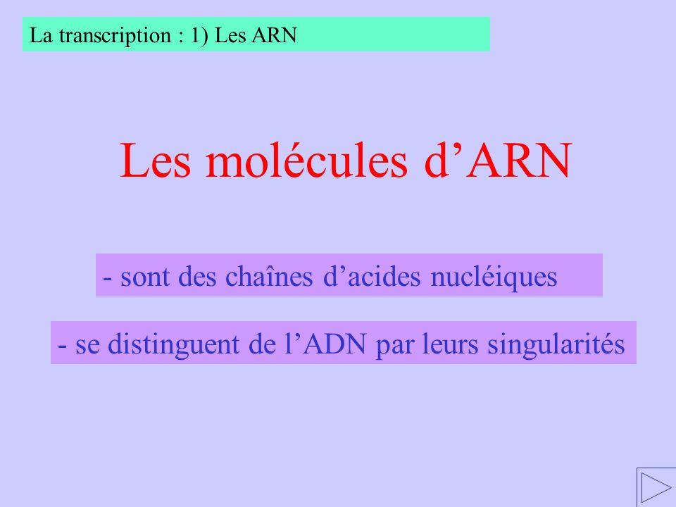 Les molécules d'ARN - sont des chaînes d'acides nucléiques