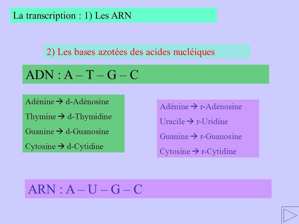 ADN : A – T – G – C ARN : A – U – G – C La transcription : 1) Les ARN