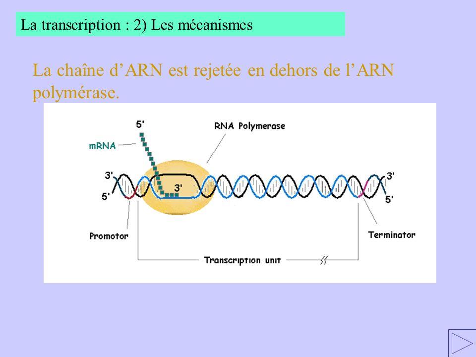 La chaîne d'ARN est rejetée en dehors de l'ARN polymérase.