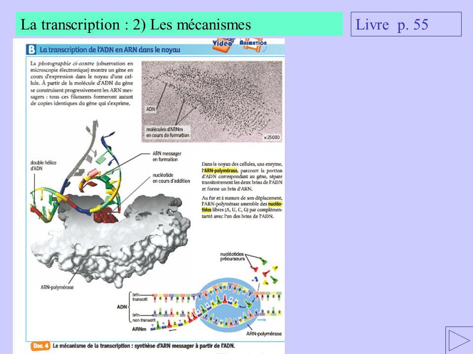 La transcription : 2) Les mécanismes
