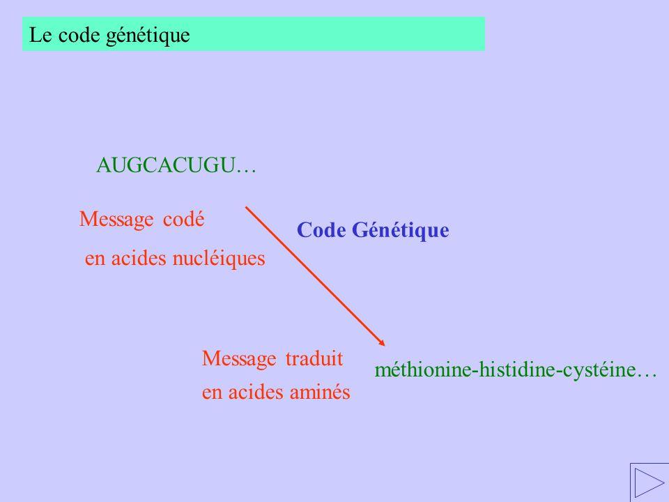 méthionine-histidine-cystéine… RENDEZ-VOUS… en acides aminés