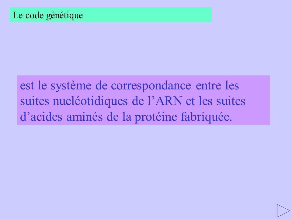 Le code génétique est le système de correspondance entre les suites nucléotidiques de l'ARN et les suites d'acides aminés de la protéine fabriquée.