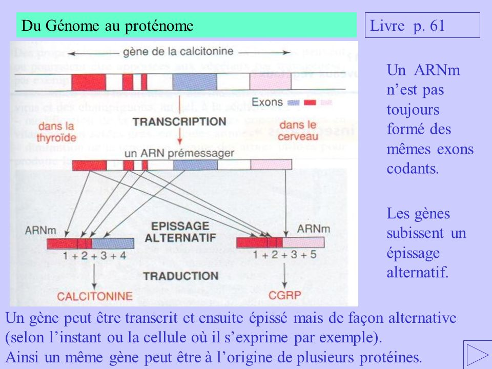 Du Génome au proténome Livre p. 61. Un ARNm n'est pas toujours formé des mêmes exons codants. Les gènes subissent un épissage alternatif.