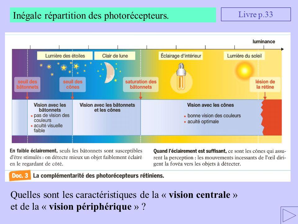 Inégale répartition des photorécepteurs.