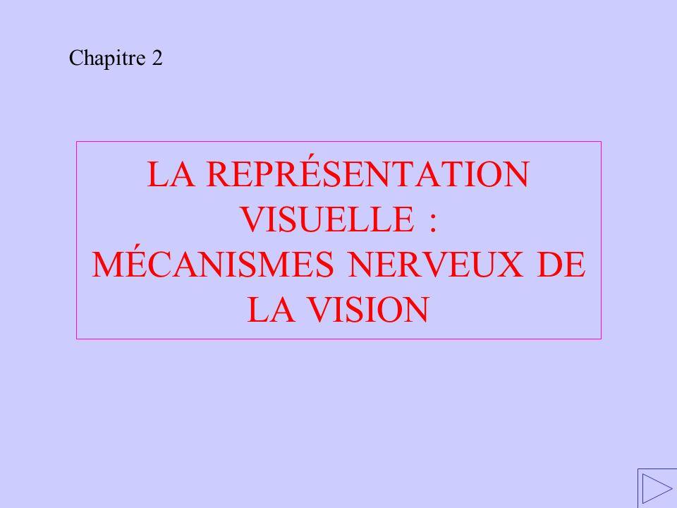 LA REPRÉSENTATION VISUELLE : MÉCANISMES NERVEUX DE LA VISION