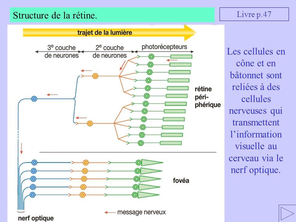 Structure de la rétine. Livre p.47.