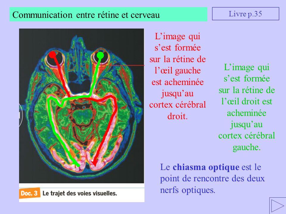 Communication entre rétine et cerveau