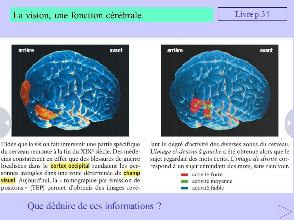 La vision, une fonction cérébrale.