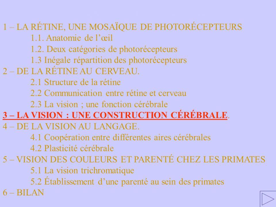3 – LA VISION : UNE CONSTRUCTION CÉRÉBRALE