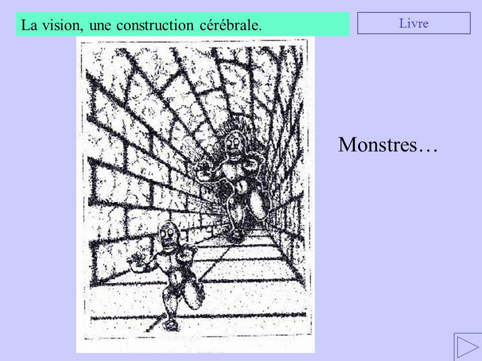 La vision, une construction cérébrale.
